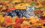 Осенний планшет: что интересного