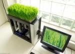 Какое растение лучше поставить у компьютера?